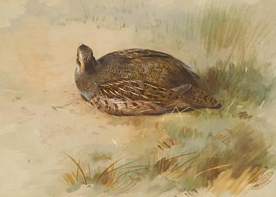 Partridge Painting - Pheasant - Partridge by Celestial Images