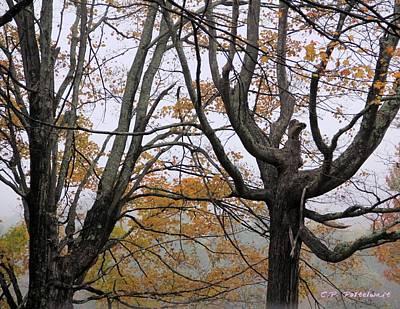 Pheonix In The Fall Print by Carolyn Postelwait