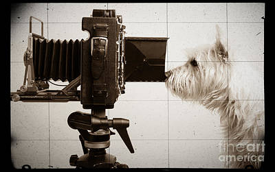 Westie Terrier Photograph - Pho Dog Grapher - Ground Glass View by Edward Fielding