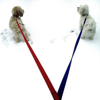 Dog Walking Digital Art - Pia And Pelle by Natasha Marco