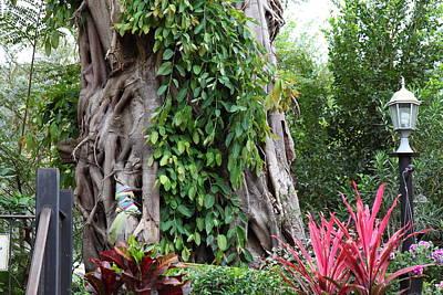 Asia Photograph - Piazza Palio - Khaoyai Thailand - 01137 by DC Photographer