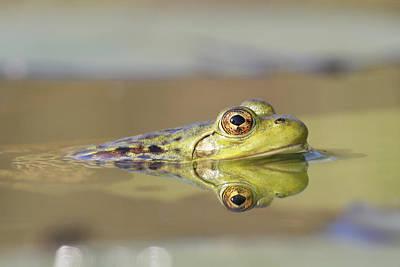 Pickerel Photograph - Pickerel Frog Nova Scotia Canada by Scott Leslie