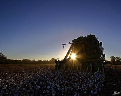 Cotton Photograph - Pickin' Through by David Zarecor