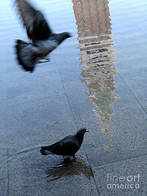 Flooding Photograph - 	Pigeons In Piazza San Marco. Venice. Italy. by Bernard Jaubert