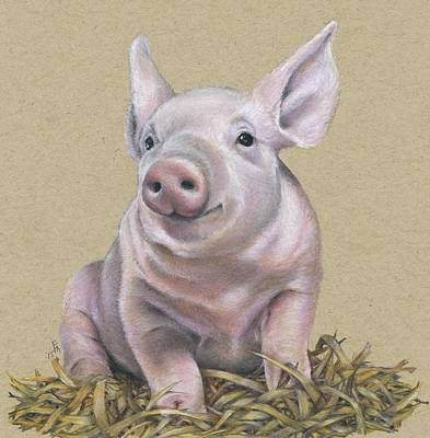Piglets Drawing - Piglet  by Fran Megerdichian
