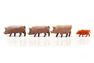 Pigs Figurines Print by Bernard Jaubert