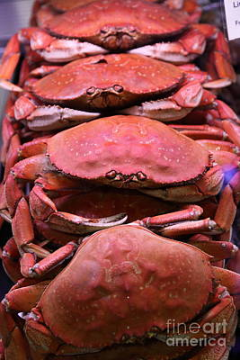 Pile Of Fresh San Francisco Dungeness Crabs - 5d20693 Print by Wingsdomain Art and Photography