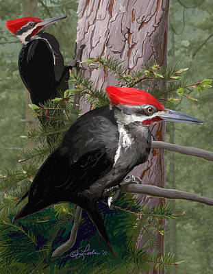 Pileated Woodpeckers Print by Pam Little