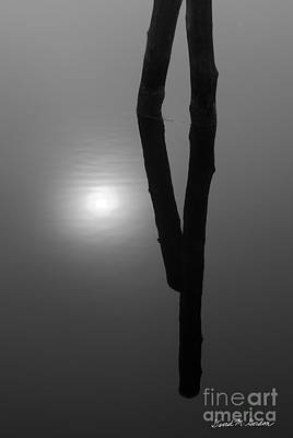 Contemplative Photograph - Pilings And Sun Reflections by Dave Gordon