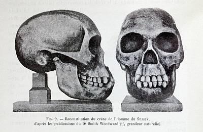 Fossil Reconstruction Photograph - Piltdown Man Skull Reconstruction by Paul D Stewart