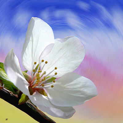 Early Spring Mixed Media - Pin Cherry Swirl by Barbara St Jean