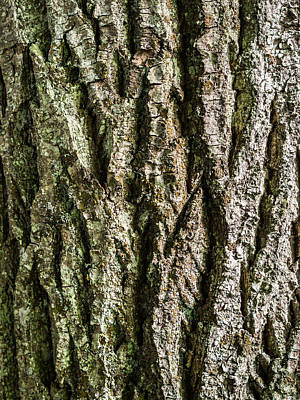 Grunge Photograph - Pine Bark Texture 4 by Hakon Soreide