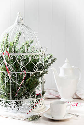 Bird Cages Photograph - Pine Branches Birdcage by Amanda Elwell