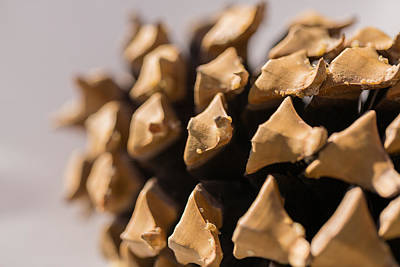 Forrest Photograph - Pine Cone Study 1 by Scott Campbell