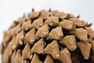 Forrest Photograph - Pine Cone Study 14 by Scott Campbell