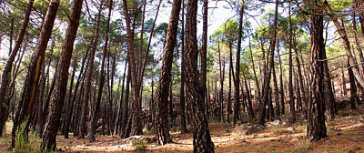 Teruel Photograph - Pine Forest by Weston Westmoreland