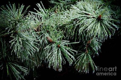 Pine Needles Photograph - Pine Needles In Ice by Betty LaRue