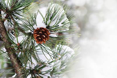 Pine Tree Print by Jelena Jovanovic