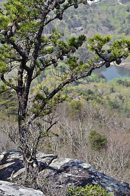 Pine Tree On A Mountain Print by Susan Leggett