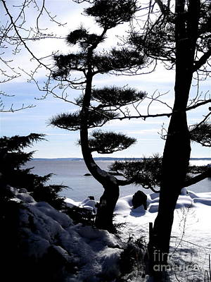 Dlgerring Photograph - Pine Tree Silhouette by D L Gerring