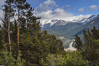 Unspoiled Art Photograph - Pine Trees In The Rocky Mountain National Park by Randall Nyhof