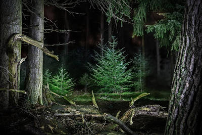 Newts Photograph - Pine Trees New Life by Dirk Ercken