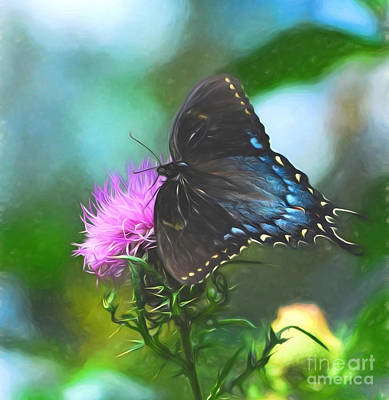 Butterfly Photograph - Pink And Blue  by Kerri Farley