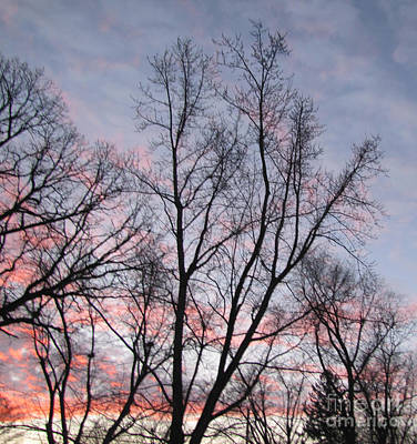 Pink And Purple Sunrise Beyond The Trees Photograph Print by Adri Turner