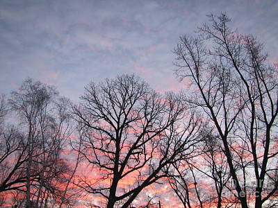 Pink And Purple Sunrise With Trees Photograph Print by Adri Turner