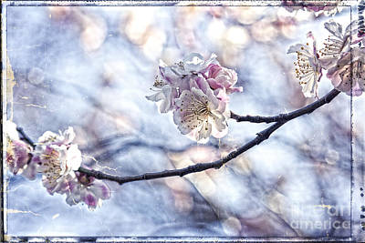 Pink And White Plum Blossoms With Tattered Paper And Film Border Print by Beverly Claire Kaiya