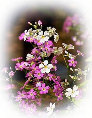 Primula Vulgaris Photograph - Pink And White Primrose by Kaye Menner