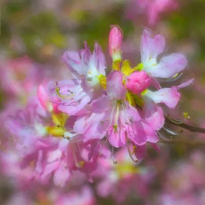 Azalea Photograph - Pink Azaleas by Joann Vitali