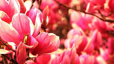 Photograph - Pink by Benjamin Prater