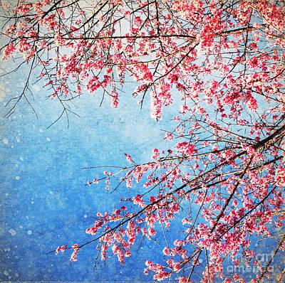 Pink Blossom Print by Setsiri Silapasuwanchai