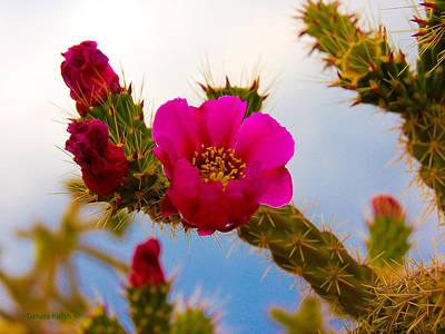 Cactus Photograph - Pink Cactus8-1-2 by Tamara Kulish