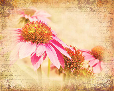 Flowers Photograph - Pink Cone Flowers by Pam  Holdsworth