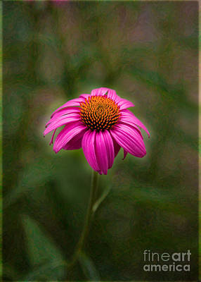 Pink Echinacea Digital Flower Photo.painting Composite Artwork By Omaste Witkowski Print by Omaste Witkowski