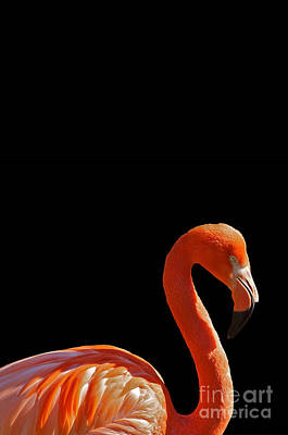 Pink Flamingo Print by Celestial Images