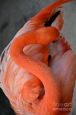 Pink Flamingo Print by Robert Meanor