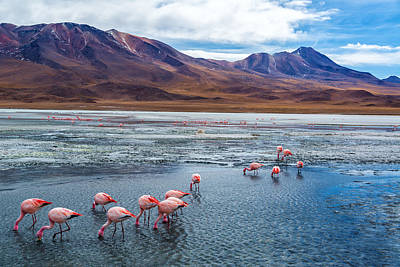Pink Flamingo Nature Photograph - Pink Flamingoes In Bolivia by Jess Kraft