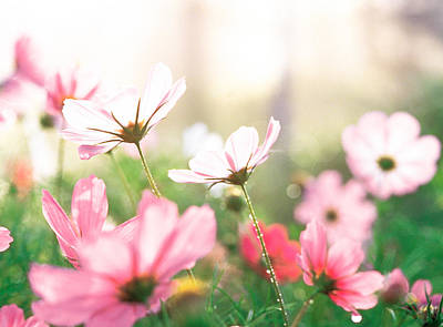 Pink Flowers In Meadow Print by Panoramic Images