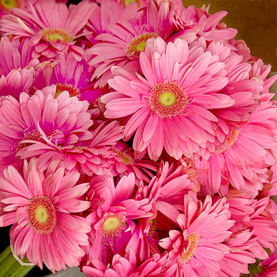 Pink Gerbera Daisies Print by Art Block Collections