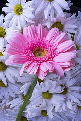 Gerbera Daisy Photograph - Pink Gerbera With Mums by Garry Gay