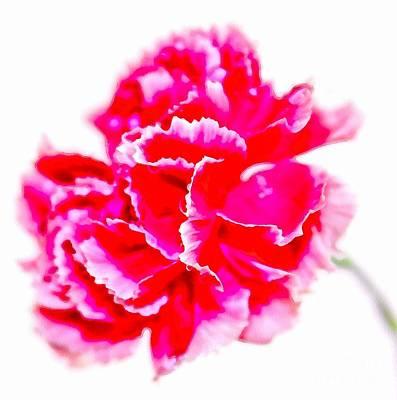 Pink Carnation Photograph - Pink Glory by Krissy Katsimbras