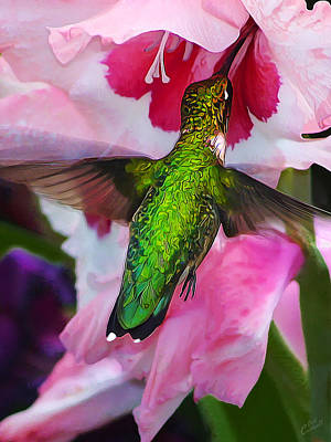 Manipulation Photograph - Pink Hummer by Bill Caldwell -        ABeautifulSky Photography