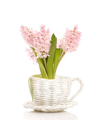 Pink Hyacinths Print by Amanda Elwell