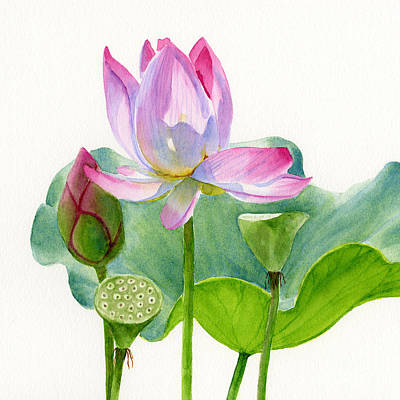 Waterlilies Painting - Pink Lotus Blossom With Pad And Bud by Sharon Freeman