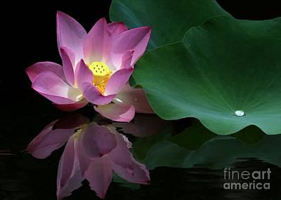 Pink Lotus Reflection Print by Sabrina L Ryan