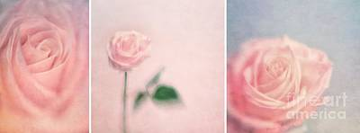 Roses Photograph - Pink Moments by Priska Wettstein