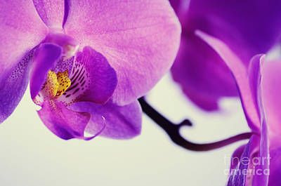 Flower Photograph - Pink Orchids Close-up by Sabine Jacobs